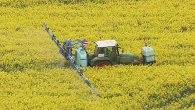 Tracteur dans un champ de Colza
