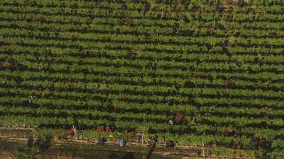 Les vignes, la Loire et ses îlots de sable