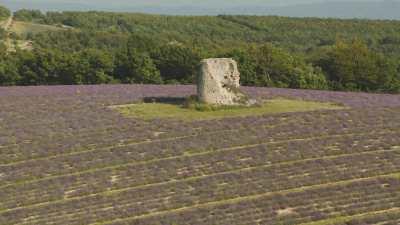 Ruine en pierre dans un champ de lavande