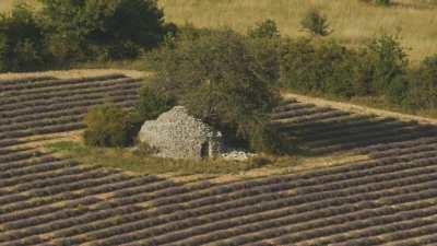 Ruines dans les champs de lavande