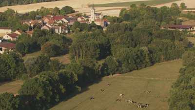 Pâturages dans la campagne française