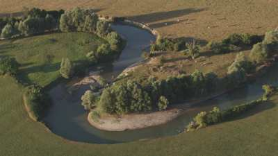 Troupeau de vache qui pâture au bord de l'eau dans la campagne française