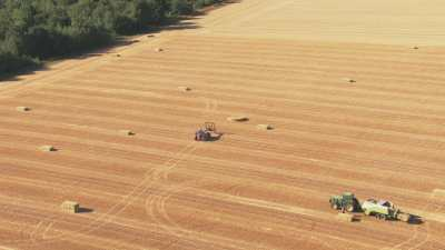 Bottelage des germes de blé, campagne française