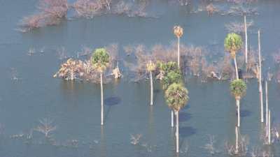 Etang saumâtre,arbres dans l'eau