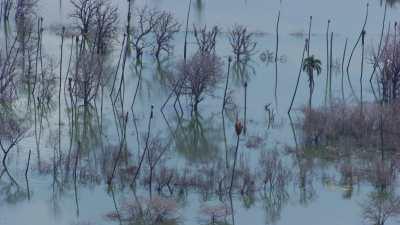 Lac d'eau saumâtre inondé, arbres dans l'eau