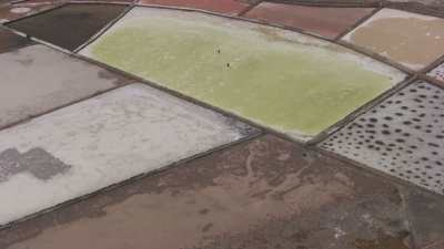 Ramassage manuel du sel de mer