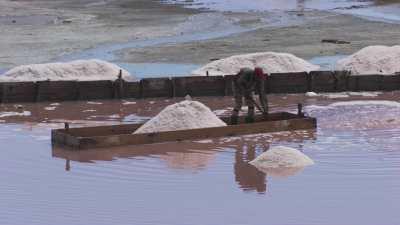 Gros plan du ramassage du sel dans un salin