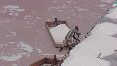 Gros plan du ramassage du sel dans les salins