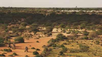 Hagadera Camp, des ânes transportent du bois