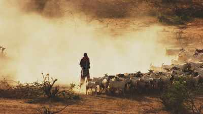 Immense troupeau de chèvres, Hagadera Camp