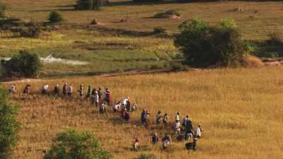 Paysans cambodgiens,dans les rizières
