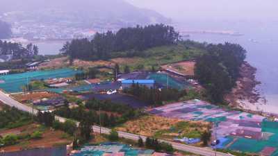 Culture et séchage d'algues en Corée