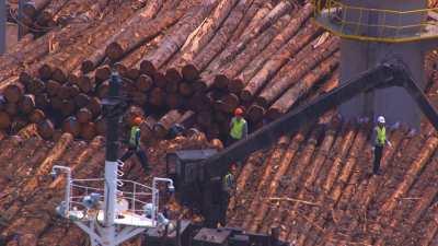 Cargo chargé de bois