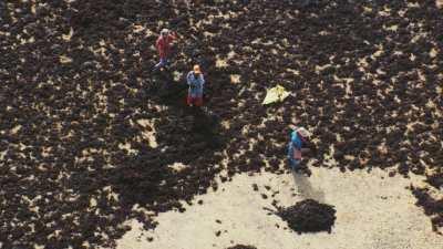 Ramasseurs et pêcheurs de l'algue rouge