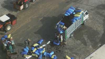 Chargement des sacs d'algue rouge, entrepôt de Sidi El Abed