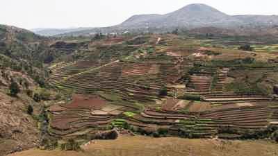 Paysage vallonné, culture de riz en terrasse