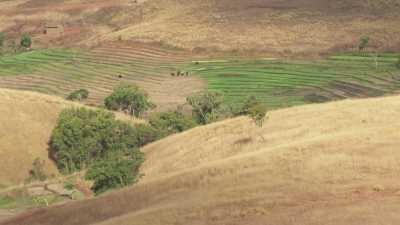 Les terres et collines arides, paysans