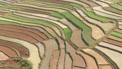 Les magnifiques champs colorés de Betafo