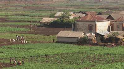De nombreux fermiers dans leurs champs travaillent la terre