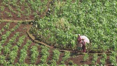 Gros plans sur femmes et enfants au milieu des champs