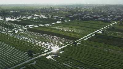 Agriculteurs frappent la surface de l'eau