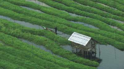 Agriculteurs en pirogues