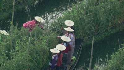 Cueillette, femmes sur les pirogues