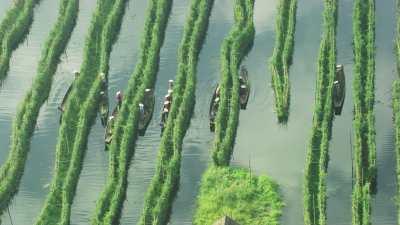 Plongée sur la cueillette, femmes sur les pirogues