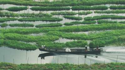 Pirogue à moteur dans les cultures sur l'eau