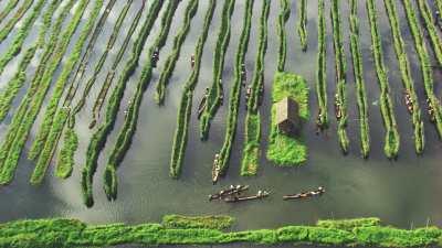 Plan large des cultures sur l'eau et pirogues