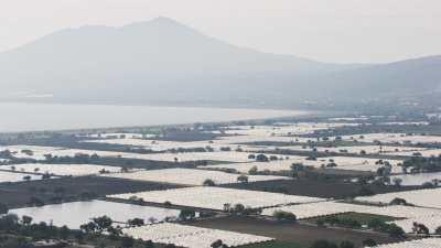 Serres au bord du lac de Chapala
