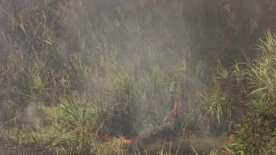 Ecobuage et travail dans les plantations de canne à sucre