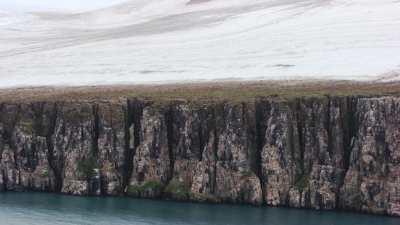 Svalbard, milliers d'oiseaux sur la falaise