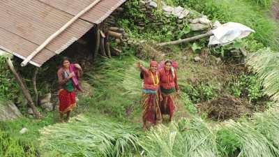 Femmes dans les rizières