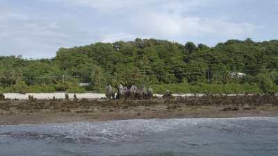 La plage aux grands pinacles coralliens