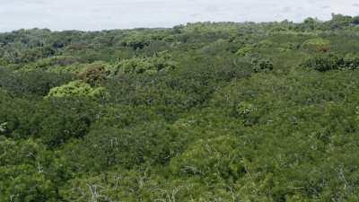 Le lagon et la forêt