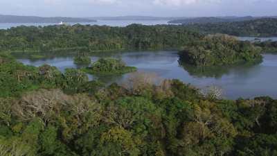 La forêt, le canal et ses rives verdoyantes