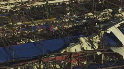 Elevage de poules après le passage du  typhon Haiyan