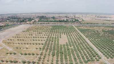 Jardins de l'Agdal, oliveraie et place au labyrinthe