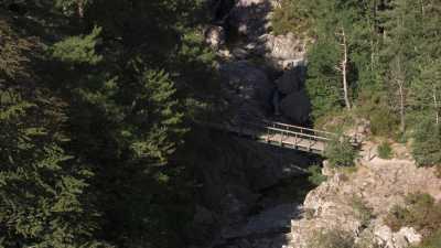 Forêt de Vizzavona