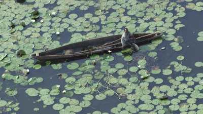 Pêcheurs sur leur pirogue parmi les nénuphars
