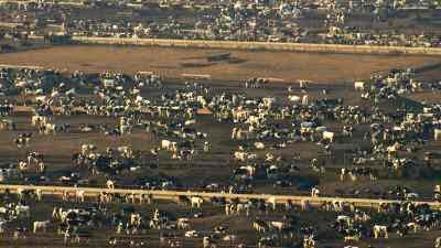 Elevage intensif du bétail aux Etats-Unis