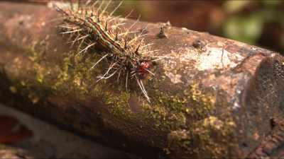 Gros plans de forêt primaire, insectes