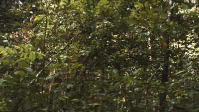 Gros plans de forêt primaire