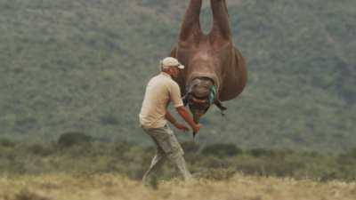 Translocation de rhinocéros